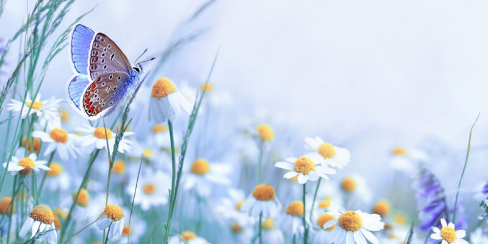 Promouvoir la conscience des fleurs sauvages