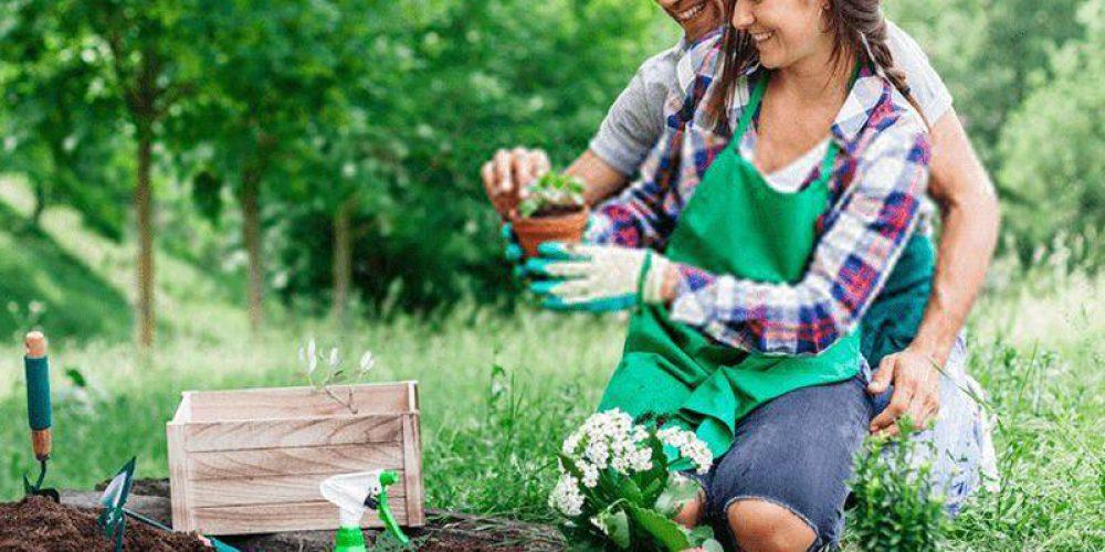 Conseils de jardinage biologique pour les jardiniers de tous niveaux