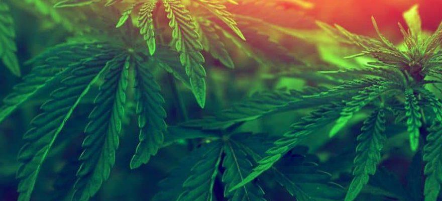 Les effets de la marijuana sur la santé sexuelle