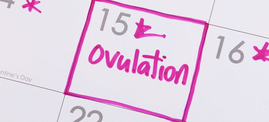 Détails et conseils pour calculer son cycle d'ovulation
