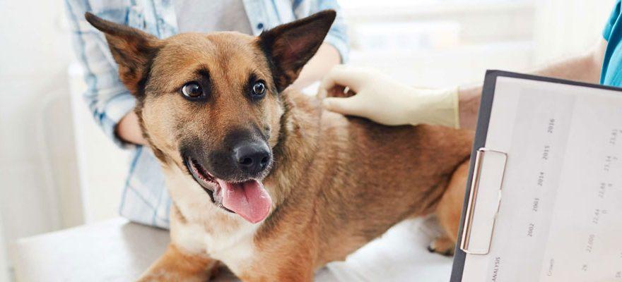 Prendre rendez-vous chez le vétérinaire directement en ligne