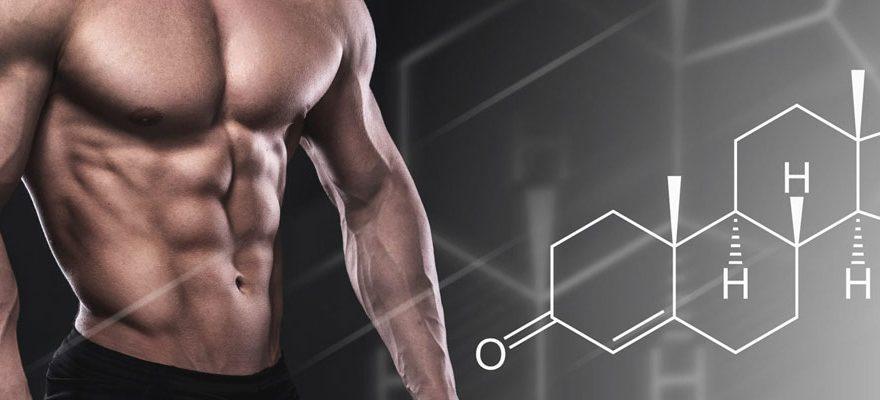 Comment améliorer et augmenter les taux de testostérone ?